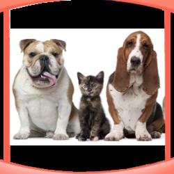 Sottocategoria Linea Pet Prodotti per i tuoi animali Gadget Eventi